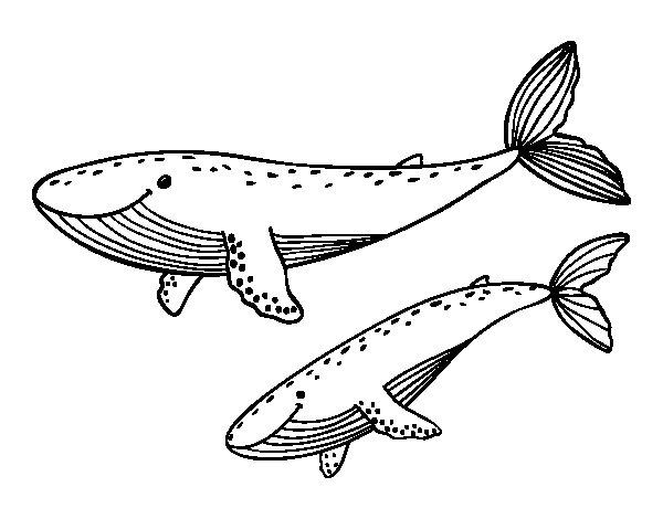 Disegno di Balene da Colorare