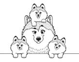 Disegno di Famiglia Husky da colorare