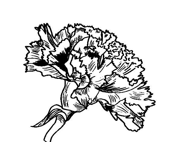 Disegno Di Rosa Con Foglie Da Colorare Acolore Com: Disegno Di Fiore Di Garofano Da Colorare