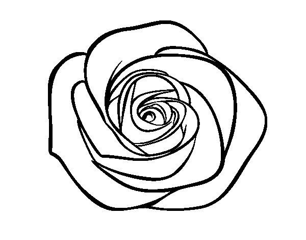 Disegno di Fiore di rosa da Colorare