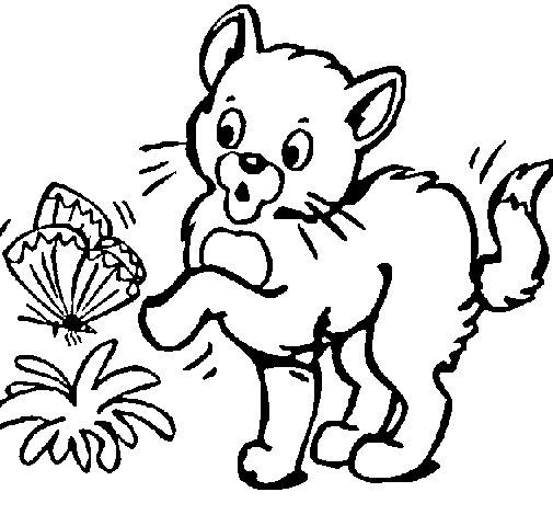 Disegno Di Gatto Da Colorare
