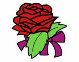 Rosa, botanica