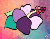 Lagunaria fiore