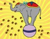 Elefante funambolo