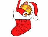 Gattino che dorme in una calza di Natale