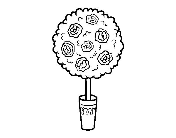 Disegno Di Arbusto Da Colorare Acolore Com