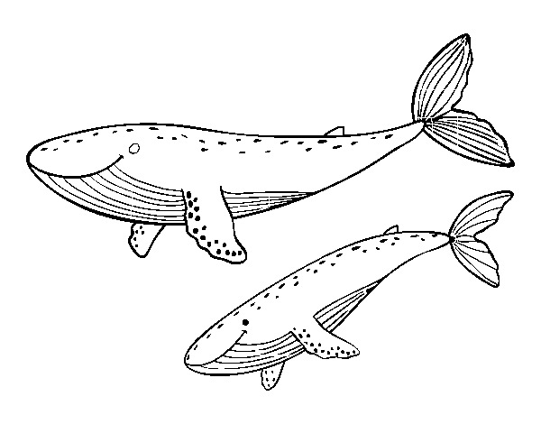 Disegno Di Balene Da Colorare Acolore Com