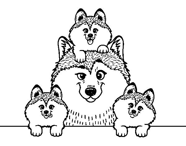 Disegno Di Famiglia Husky Da Colorare Acolore Com
