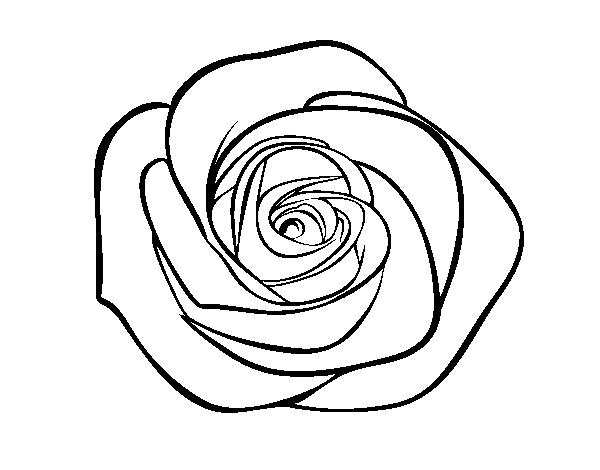 Disegno Di Rosa Con Foglie Da Colorare Acolore Com: Disegno Di Fiore Di Rosa Da Colorare